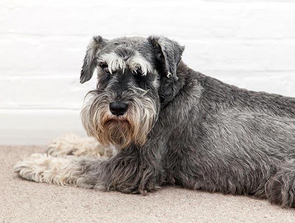 Hardy the dog – Brand+Soul – Brand Strategy | Logo & Identity Design | Brochure Catalogue & Direct Mail | Marketing | Web & Digital